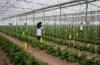 قابل توجه کشاورزان و گلخانه داران