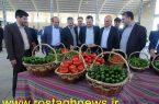 فاز اول یک واحد گلخانه ای مدرن دراسلام آباد افتتاح شد