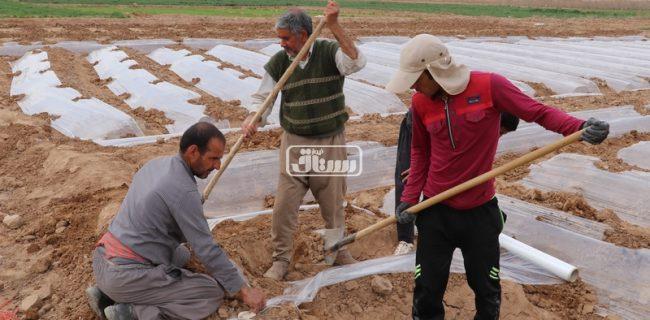 رئیس جهاد کشاورزی رستاق : کشاورزان خسارت دیده از تگرگ به شرکت بیمه اشکذر مراجعه کنند