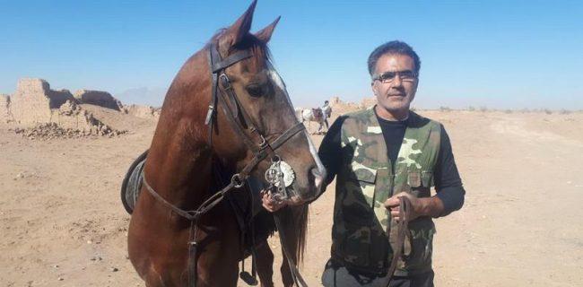شو سواره سراسری اسب های بومی فلات ایران